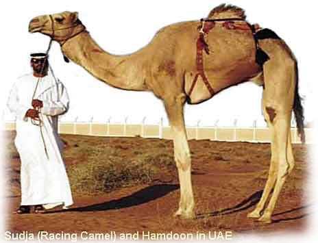 race_camel1.jpg