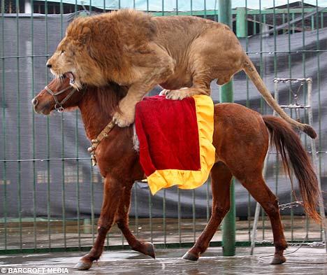 LionBAR0602_468x393.jpg