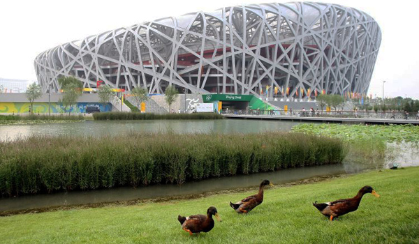 ducks1-7601.jpg
