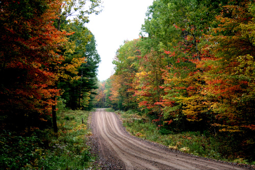 autumn_color_by_lida_rose_at_flickr.jpg