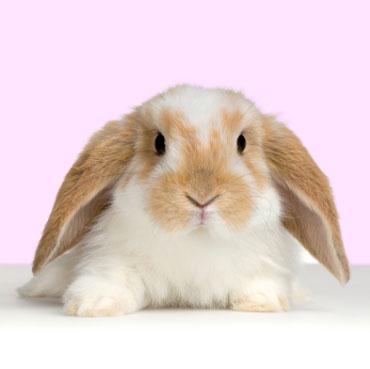 lop_rabbit_easter.jpg