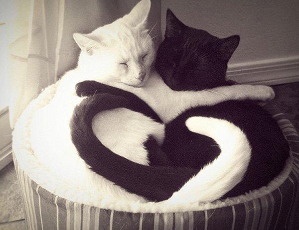 yin_yan_cats.jpg