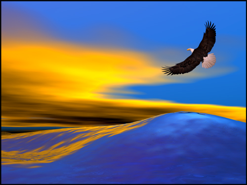 eagle_27874.jpg