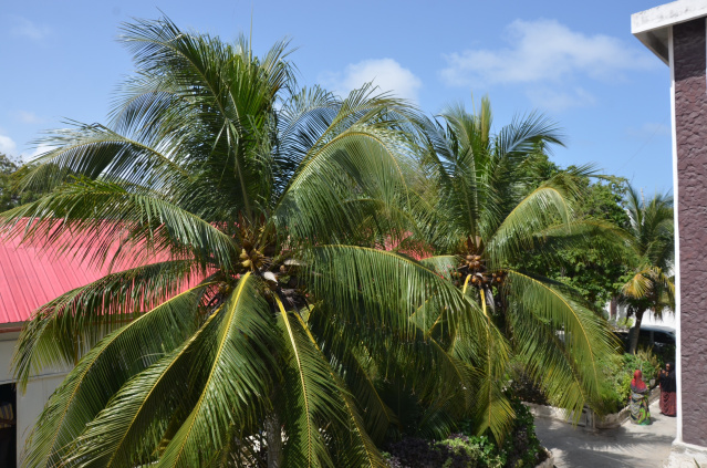 Palm trees in the courtyard