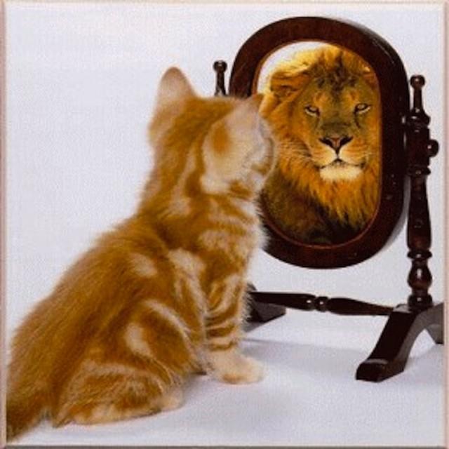 cat-sees-lion-mirror.jpg