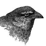 Profile photo of malistar2012